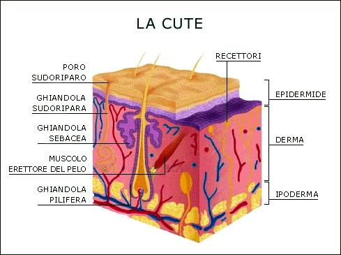 Pigmentazione di pelle su labbra