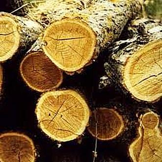 Cos è il legno tipologie di legno lavorazione del legno